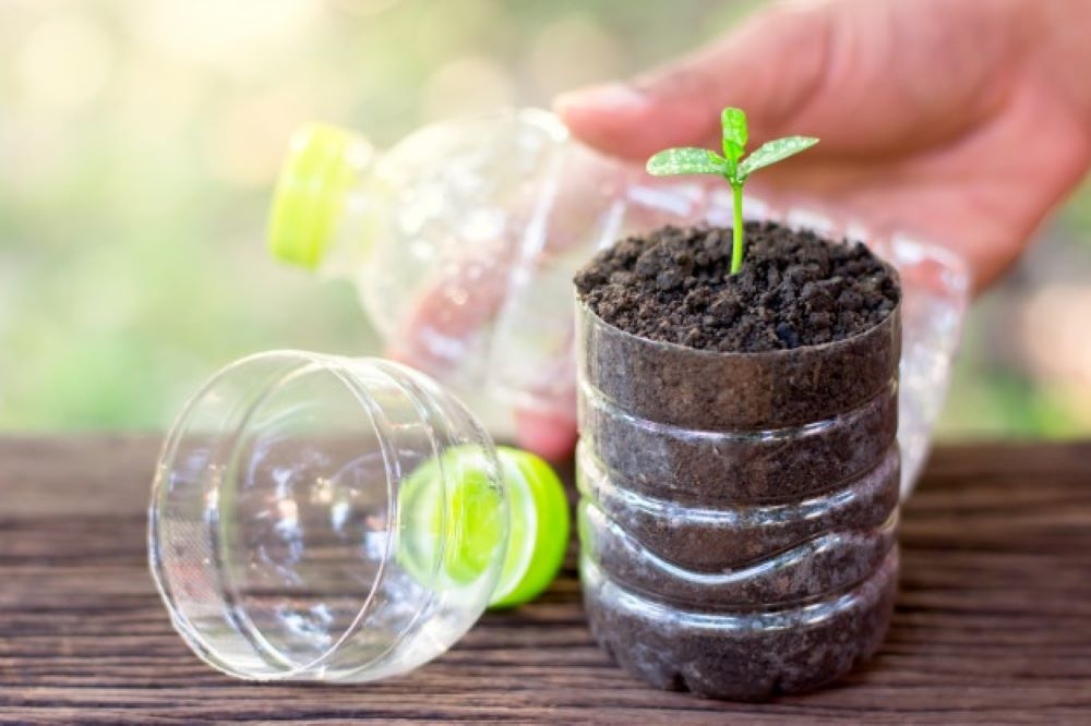 small plant growing plastic bottle