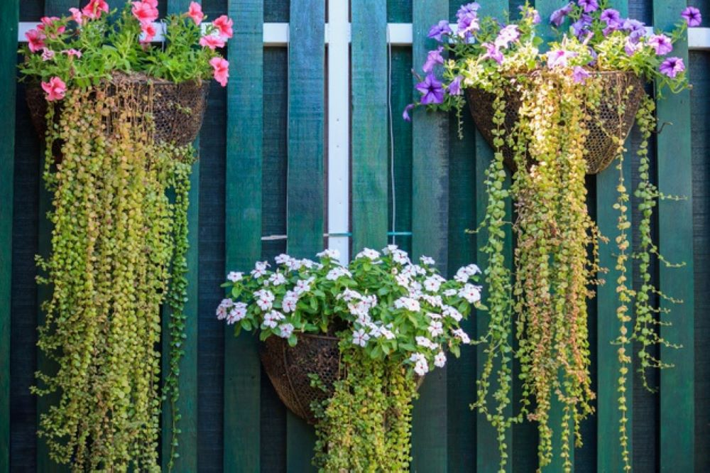 Floral Wall planters
